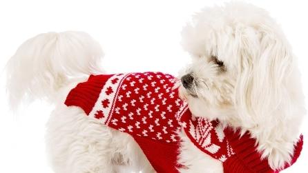 Natale 2016: 20 regali per chi ama cani e gatti