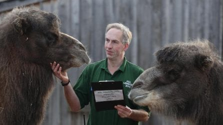 Lo zoo di Londra e il controllo annuale dei suoi 18 mila animali