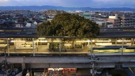 Questa stazione giapponese è stata costruita attorno ad un albero secolare per non abbatterlo