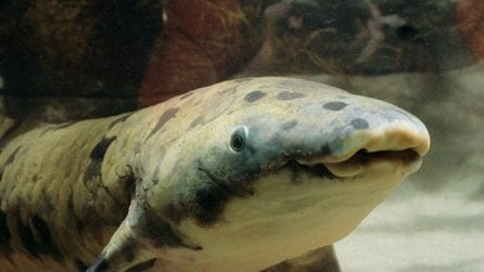 È morto il pesce più anziano del mondo: ecco chi era Nonno