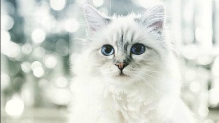 I gatti diventati star del web