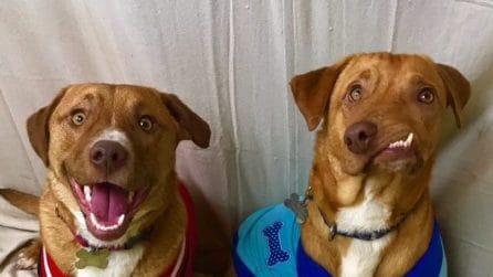 Picasso, il cane 'storto', e Pablo, abbandonato, conquistano il web: la storia dei fratelli