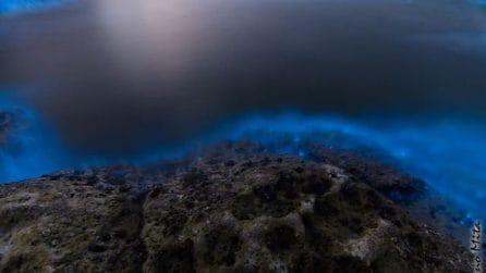 Le alghe che si illuminano arrivano in Salento: cos'è la bioluminescenza