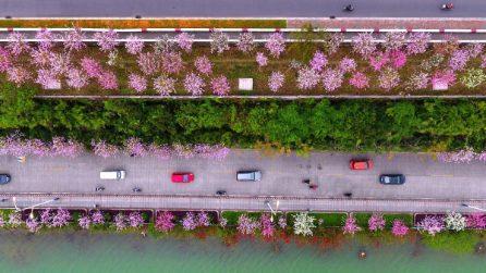 Liuzhou, l'incantevole città devota ai fiori e al verde