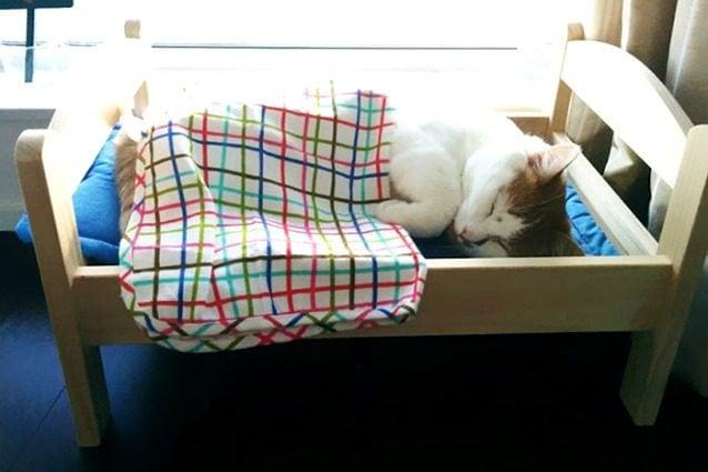 Sgabello ditta digestione polvere naturale per cani gatti g