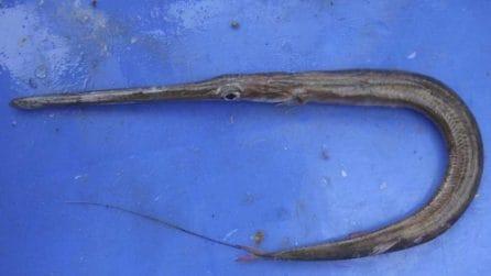 Nuovi pesci velenosi e commestibili: l'invasione nel Mar Mediterraneo