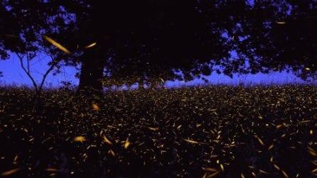 Migliaia di lucciole illuminano la notte: spettacolo suggestivo nella Valle del Sele