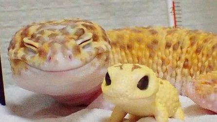 Sembrano due pupazzetti ma uno dei due è reale: le immagini di una tenera amicizia