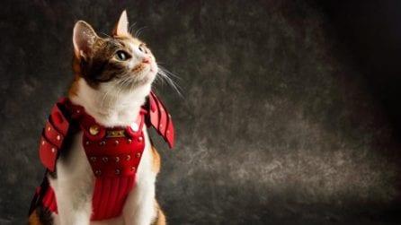 Cani e gatti in armatura: l'ultima irresistibile tendenza dal Giappone