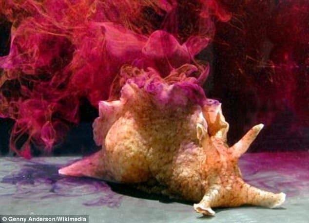 L'Aplysia californica, una specie comune di lumaca di mare vive al largo della costa occidentale degli Stati Uniti e Messico settentrionale
