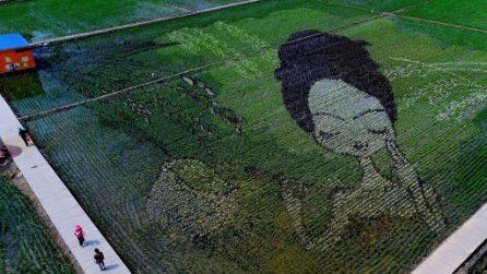 Cina, l'arte delle risaie: ecco come vengono realizzati questi enormi disegni