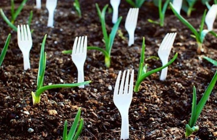 Use plastic forks to keep rabbits and other animals from destroying your garden. This will scare them off and your plants will be safe.