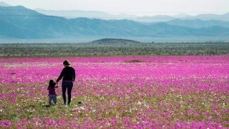 È uno delle zone più aride al mondo: la fioritura straordinaria del deserto