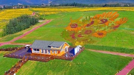 I Girasoli di Van Gogh diventano un gigantesco campo di fiori