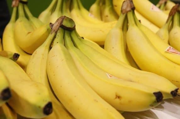 Today's banana has a handy, graspable shape and tastes better.