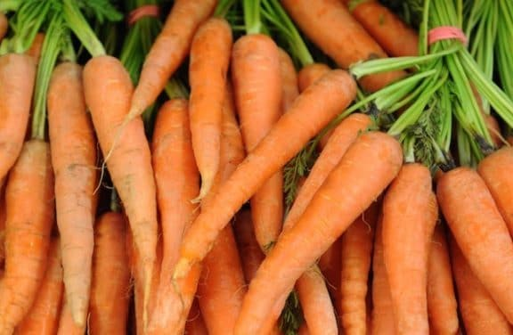 Today, carrots are orange and an annual winter crop.