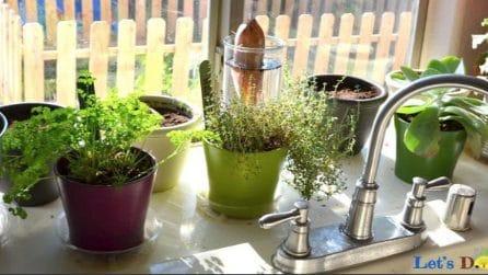 10 erbe aromatiche che è possibile coltivare direttamente nella tua cucina