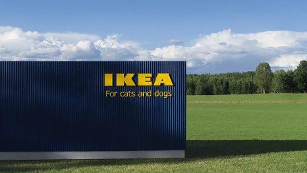 IKEA per cani e gatti: ecco la nuova linea LURVIG pensata per animali domestici