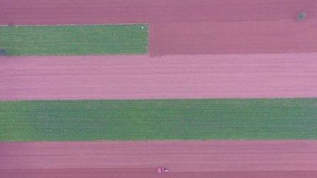 Sembrano opere d'arte ma sono gli spettacolari campi di riso della Cina