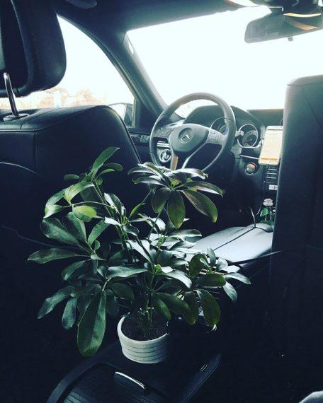 All'interno di questa macchina nell'inquinatissima Pechino c'è anche un porta piante, per mantenere l'aria pulita all'interno del veicolo. Fonte: https://www.reddit.com/r/mildlyinteresting/comments/758dfa/the_car_i_took_in_beijing_had_a_plant_in_it_for/