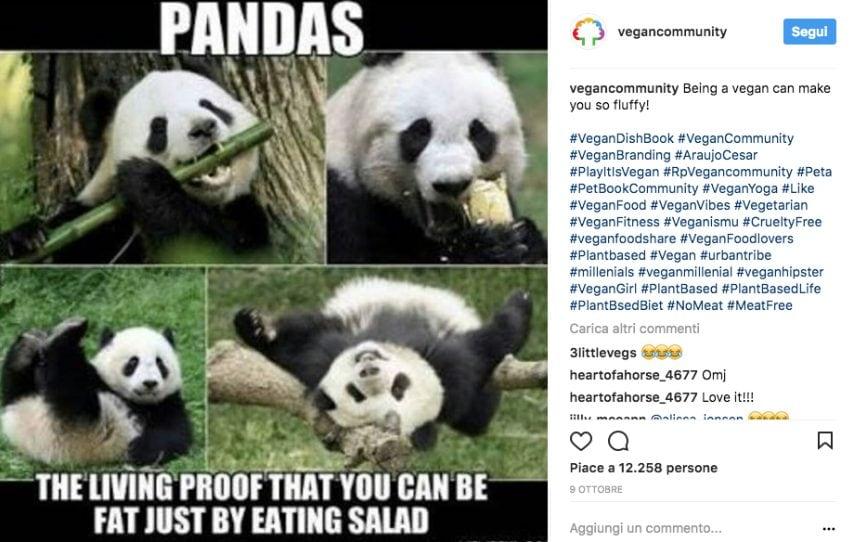 Il panda è la prova vivente che anche i vegani possono ingrassare