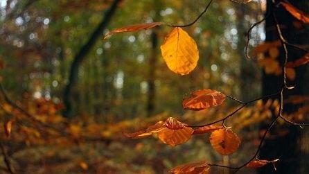 Lo spettacolo autunnale delle foglie che cambiano colore
