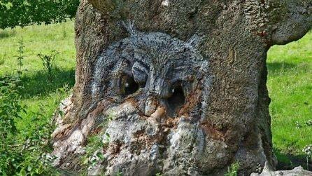 Questi alberi hanno sembianze umane o mostruose: il motivo vi sorprenderà