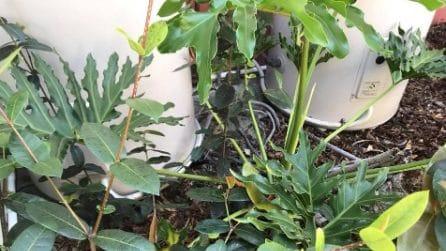 Tra le foglie c'è un serpente velenoso, ma quasi nessuno riesce a trovarlo: la foto virale su Fb