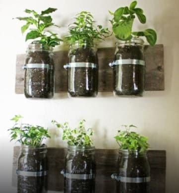 Put topsoil and herbs in the jars.