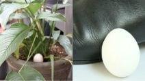 I 7 usi alternativi delle uova: le potenzialità che non tutti conoscono