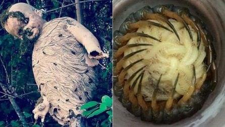 Il lato macabro della natura: le foto virali che vi faranno accapponare la pelle
