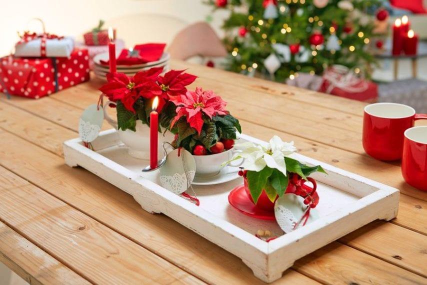 Stelle Di Natale Immagini.15 Modi Per Decorare Casa Con Le Stelle Di Natale