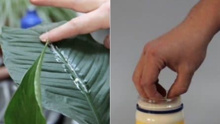 I 7 usi alternativi della maionese: le potenzialità nascoste che vi stupiranno