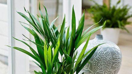 Le piante da appartamento che migliorano la qualità della vita