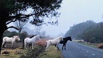La foto dei pony che commuove milioni di persone