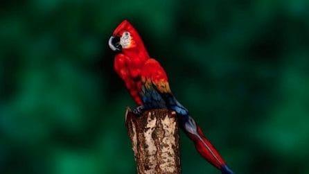 Sembra un pappagallo, ma l'apparenza inganna: guardando meglio resterete a bocca aperta