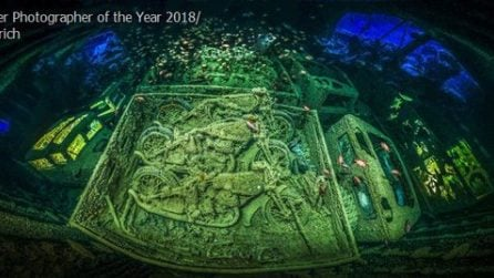 """I vicitori del prestigioso """"Underwater Photographer of the Year"""" 2018: gli scatti spettacolari"""