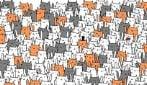 Non lasciarti ingannare dalla coda: riesci a trovare il coniglio tra questi gatti?