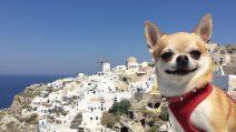 Miami, il chihuahua-blogger che viaggia in giro per il mondo