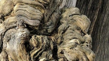 Sull'albero si nasconde un animale: riuscirete a scoprire cos'è?