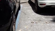 Calcinacci si staccano da un palazzo di via Bergamo e cadono su un'auto