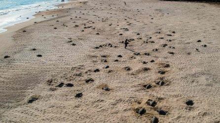 Visti da lontano sembrano solo dei buchi nella sabbia: in realtà c'è dell'altro da scoprire