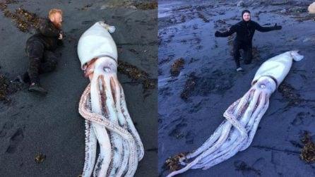 Stanno per immergersi, avvistano a riva una creatura lunga 4 metri e mezzo