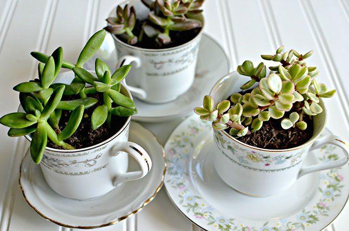 Fonte: https://hip2save.com/2015/05/07/succulent-tea-cups-mothers-day-gift-idea/