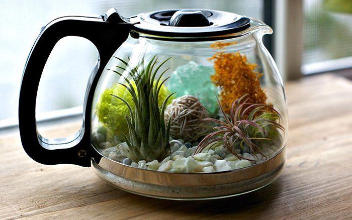 Fonte: https://www.acharmingproject.com/blog/2015/1/26/plants-and-coffee-lets-make-a-coffee-pot-terrarium