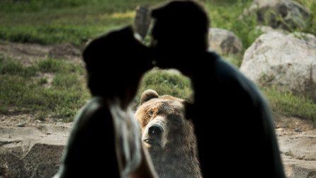 Si sposano allo zoo, ma qualcuno non è d'accordo: le foto diventano virali