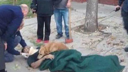 Il suo padrone è ferito gravemente: il gesto del cane dimostra quanto sia speciale il loro legame