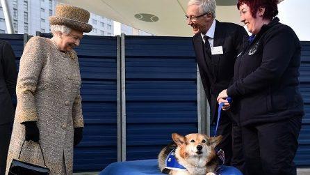 La Regina Elisabetta II e la sua passione per i cani
