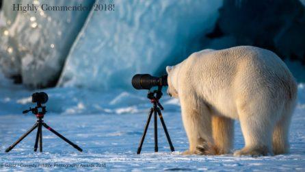 Le immagini più divertenti degli animali: assegnati i The Comedy Wildlife Photography Awards 2018