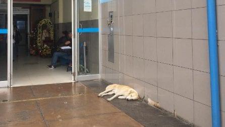 Il padrone muore, il cane lo attende fuori l'ospedale: le immagini del cucciolo sono emozionanti